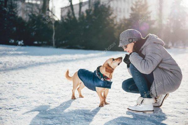 hướng dẫn dạy chó nghe theo lời