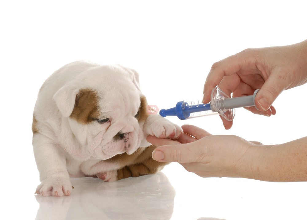 Tiêm phòng vacxin cho thú cưng Đà Lạt