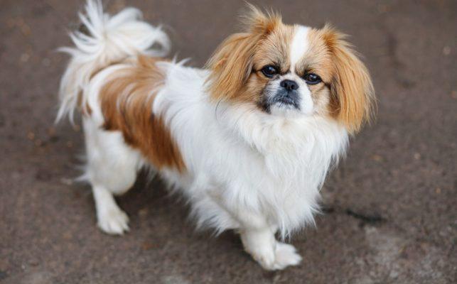 Cách trị ve chó đơn giản và hiệu quả